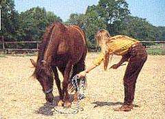 BHA - liggen op commando - http://www.horsemanship.org/grondwerk/liggen.html